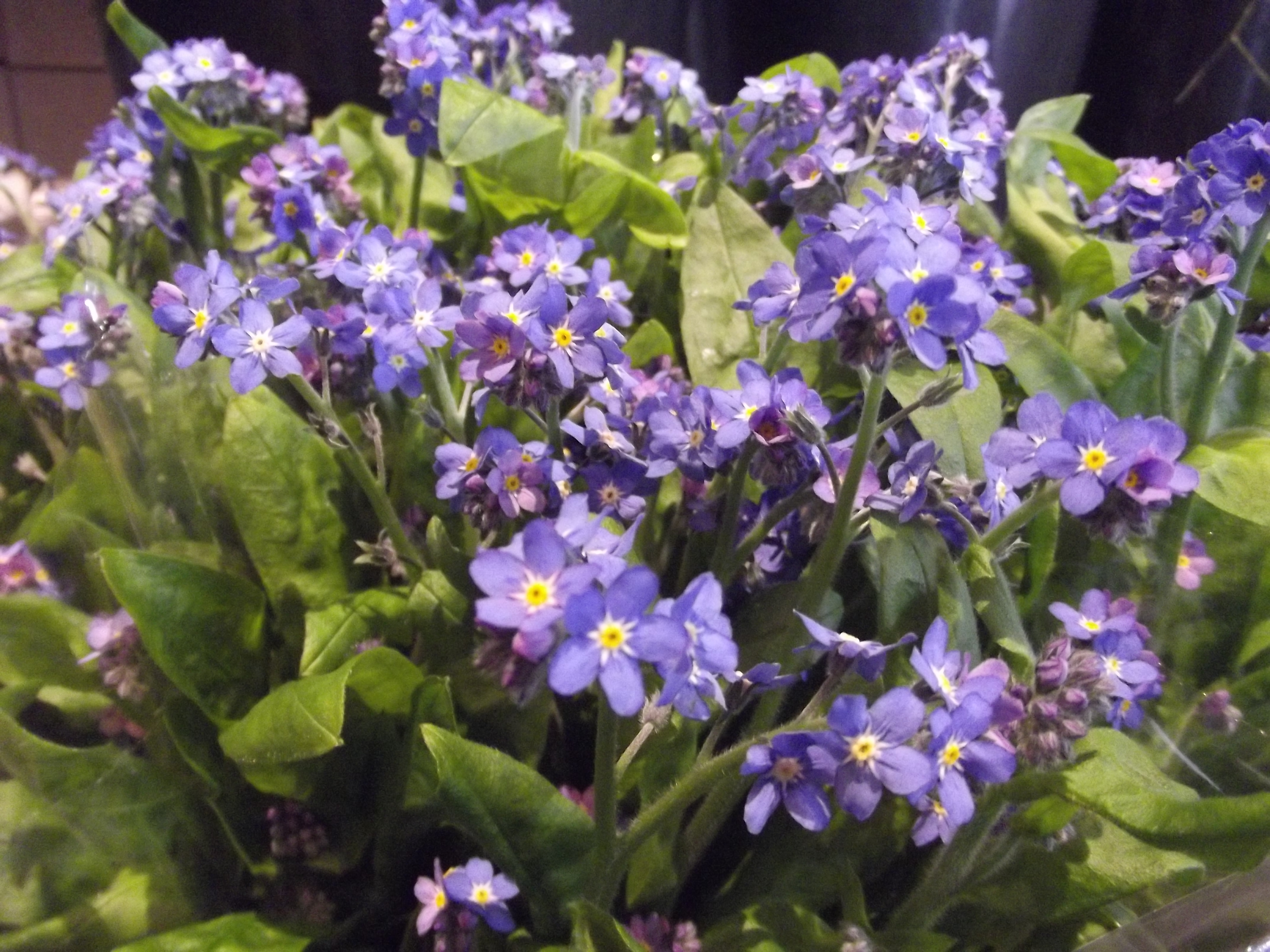 bloemen gratis bezorgen